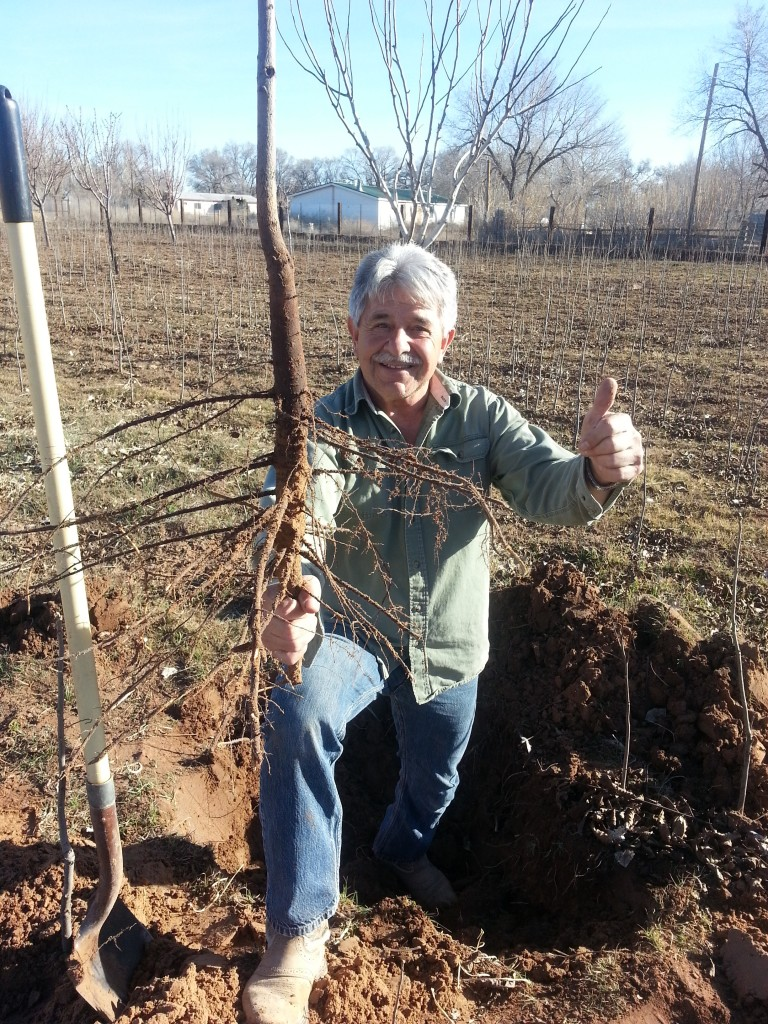 A healthy pecan root system!